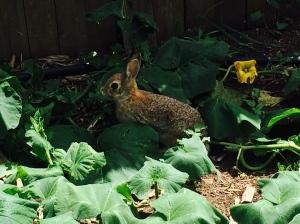 the garden bunny
